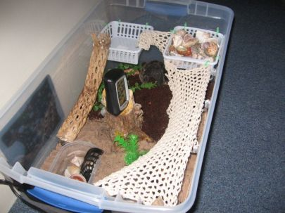 Image from {http://petdiys.com/diy-hermit-crab-habitat/}
